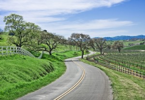 winding road through vineyard